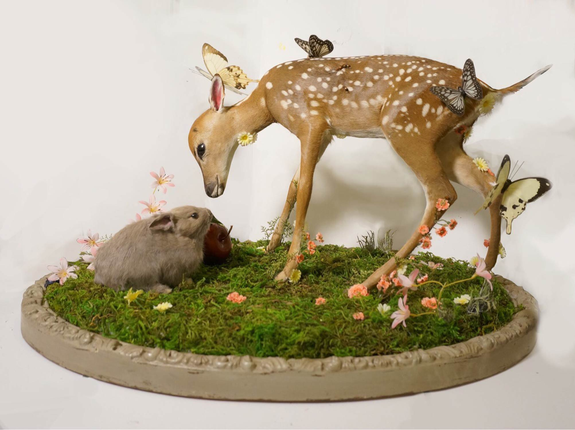 Taxidermy by Divya Anantharaman