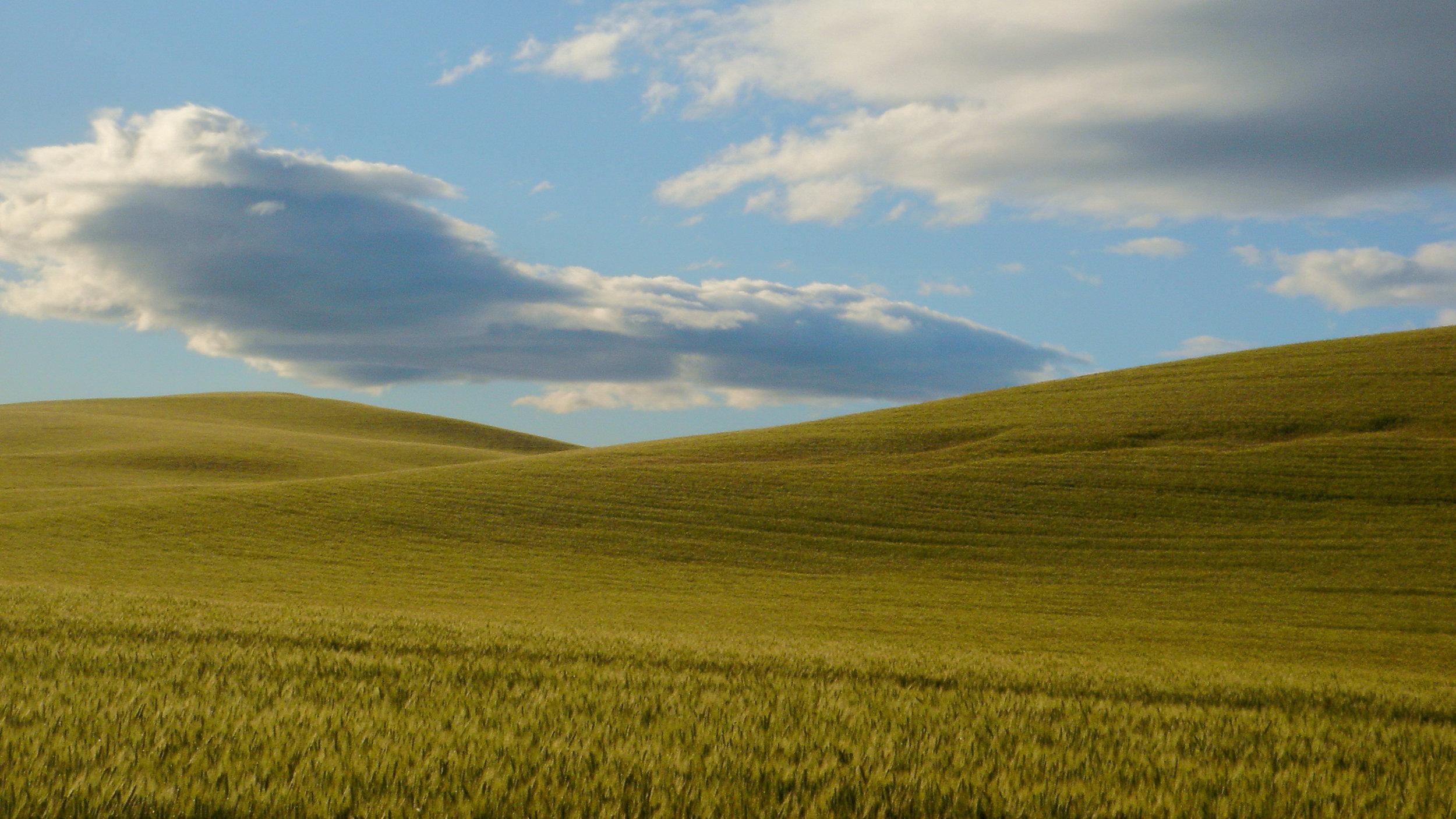 Fields of wheat near Jeff's childhood home.