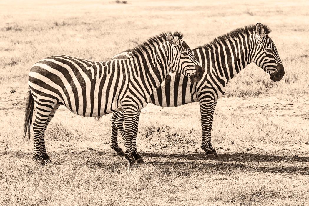 Africa2013_05185-Edit.jpg