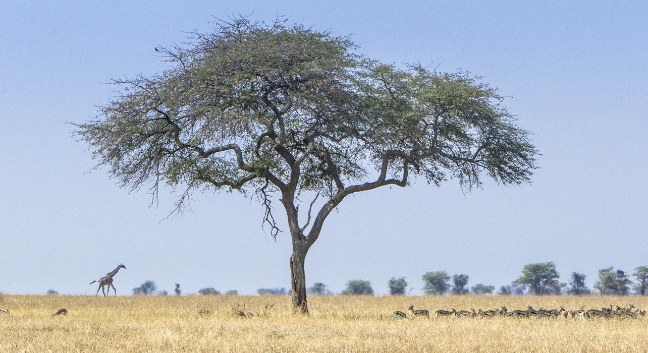 Reznicki_Africa__047.jpg