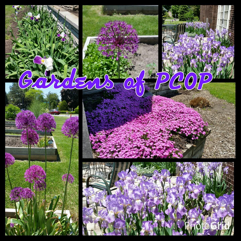flower gardens.jpg