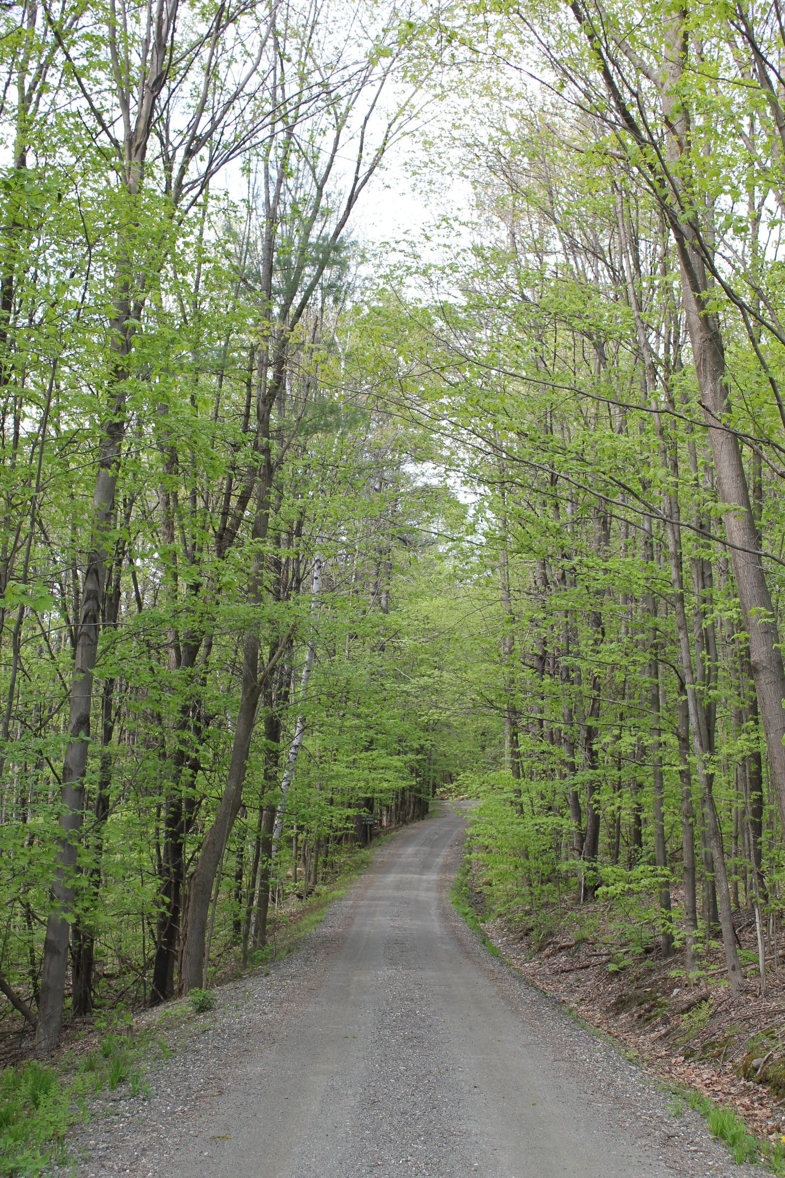 driveway vert.jpg