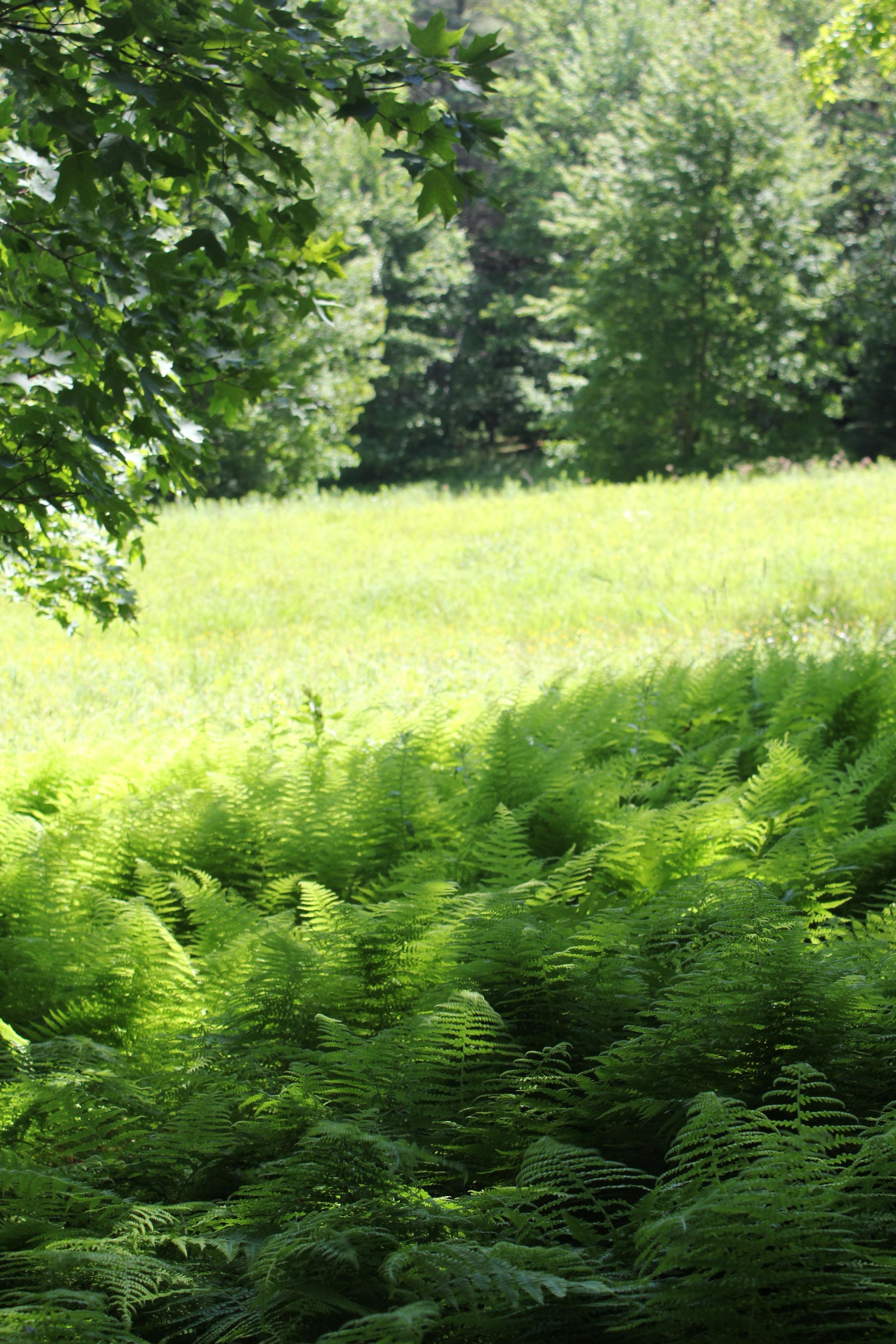 pasture vert.jpg