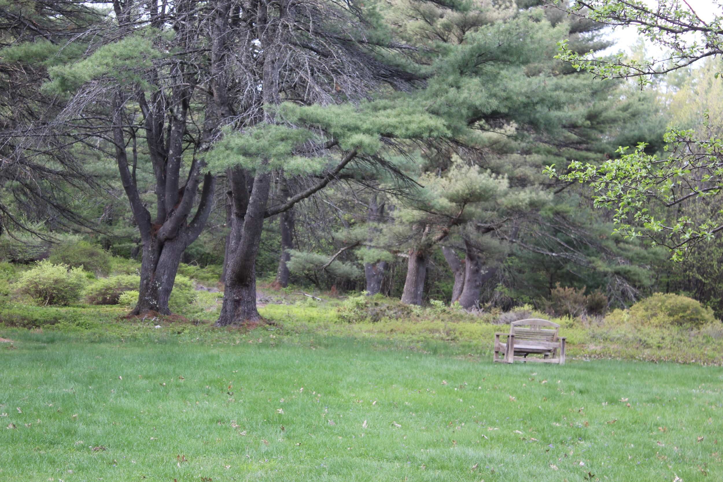 meadow w bench.jpg