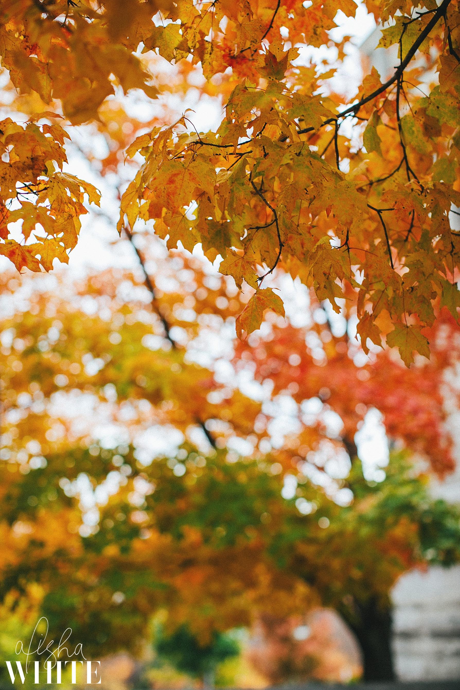 bloomingtonindianaengagementphotography.jpg