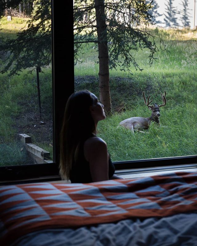 Afternoon visitor outside my room at the @banffcentre  #banff #wildlife #photographer #selfportrait #banffcentre