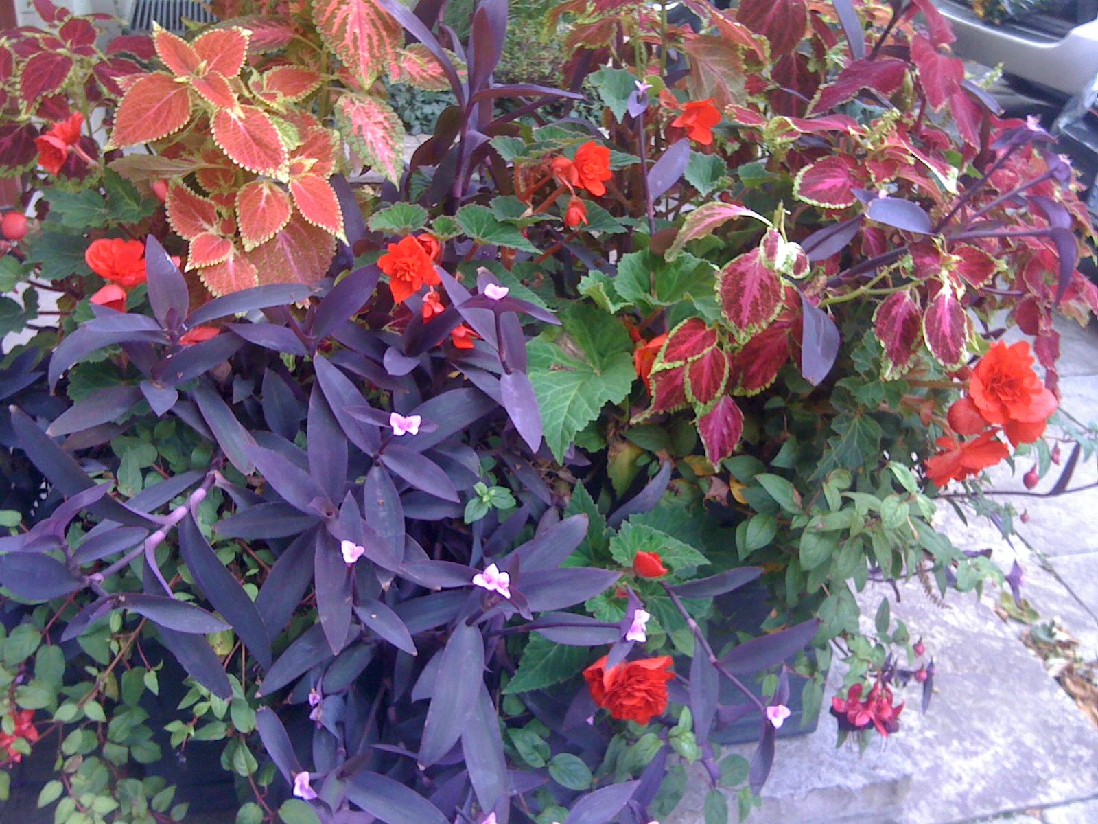 purple red shade summer planter