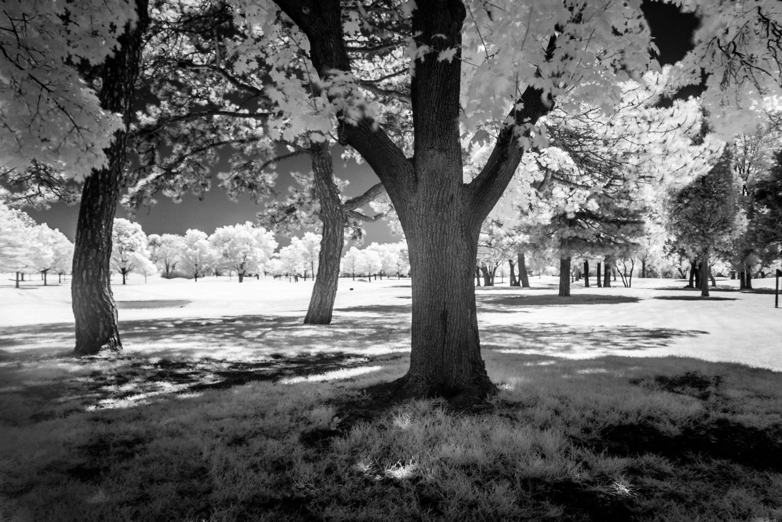 Porter_Photo_Infrared-8.jpg