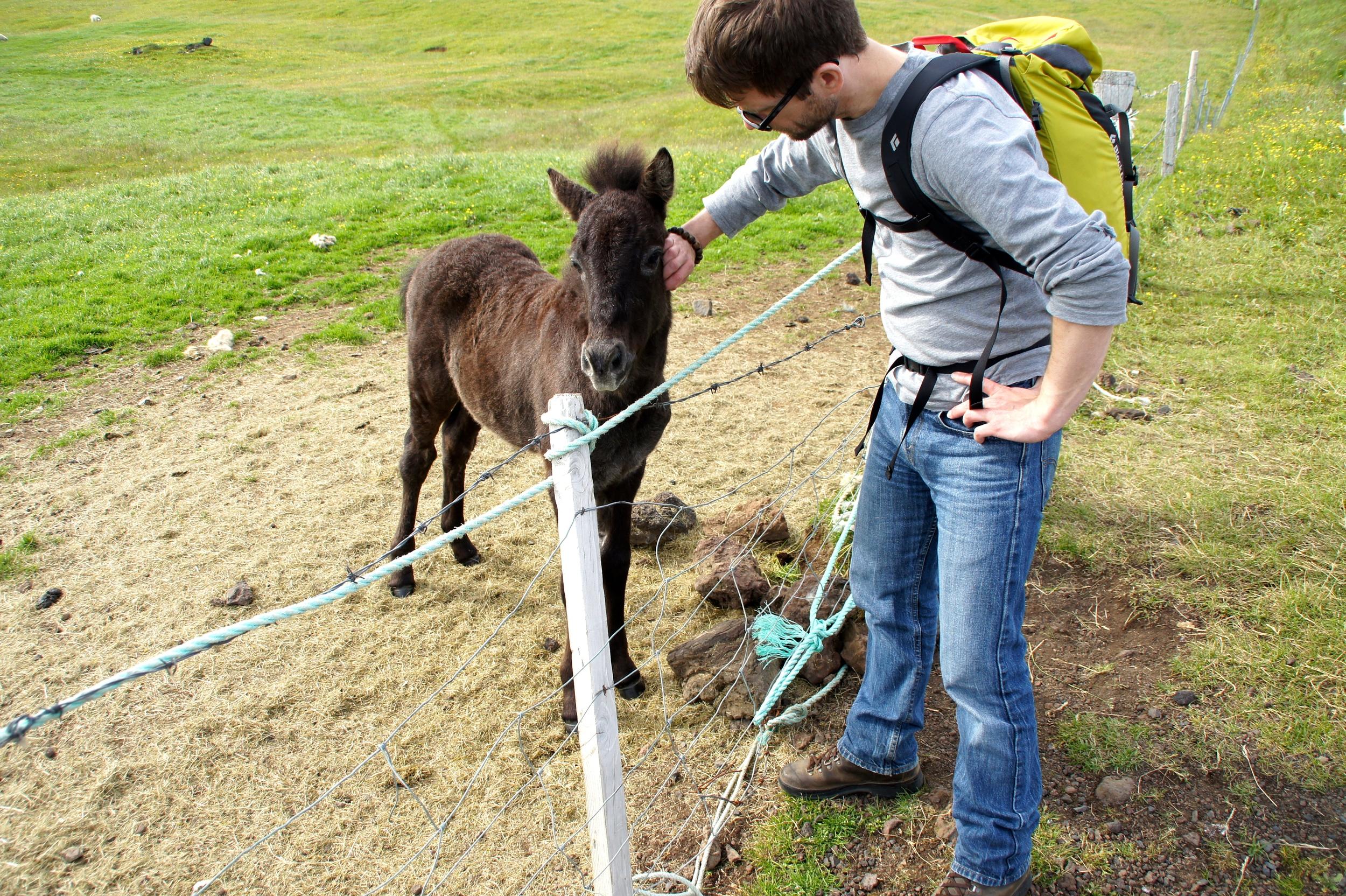 Chris befriending a young foal.