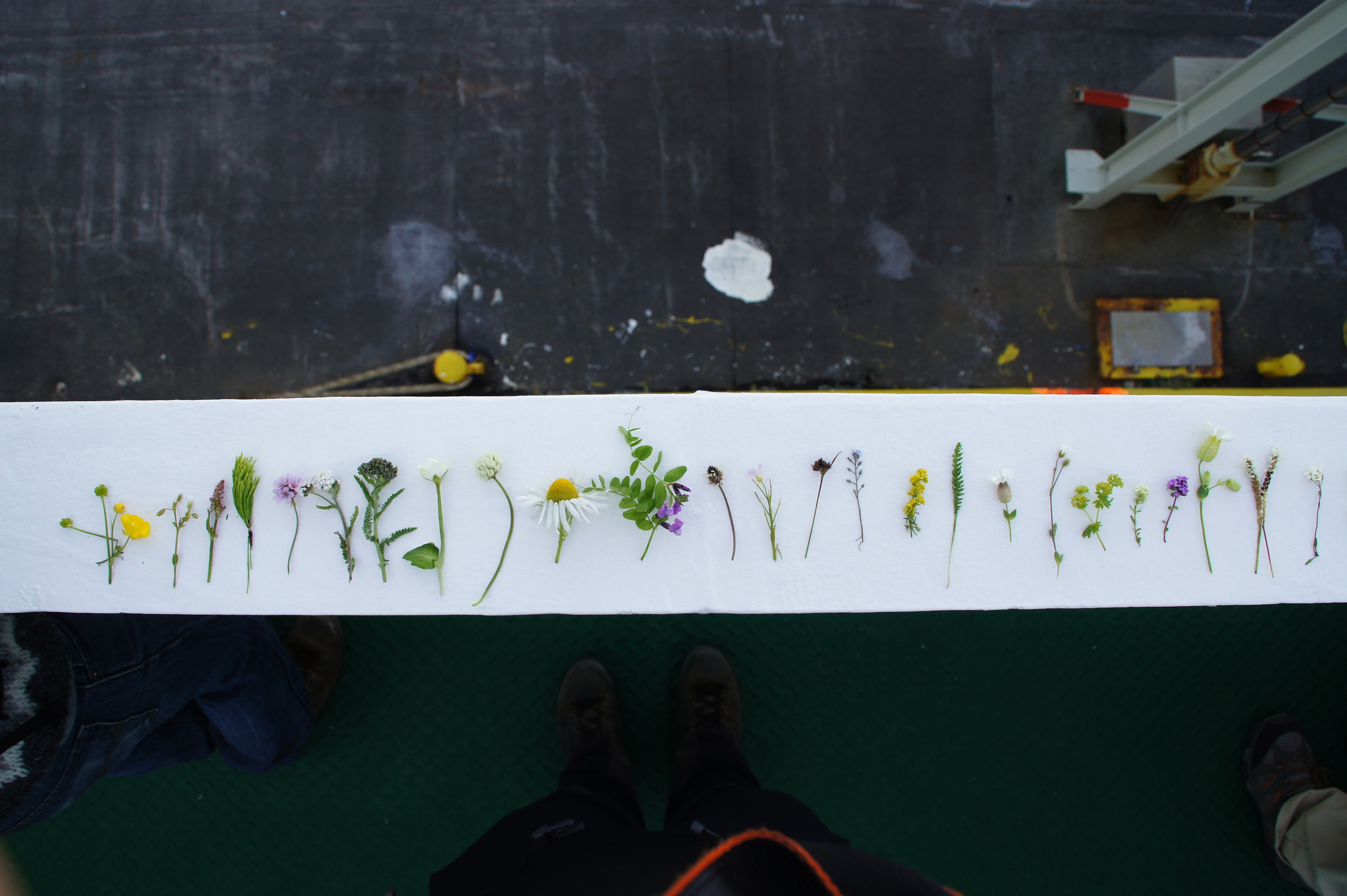 Once aboard the ferry, I laid out my impressive collection of flowers. So many different kinds of tiny wildflowers.