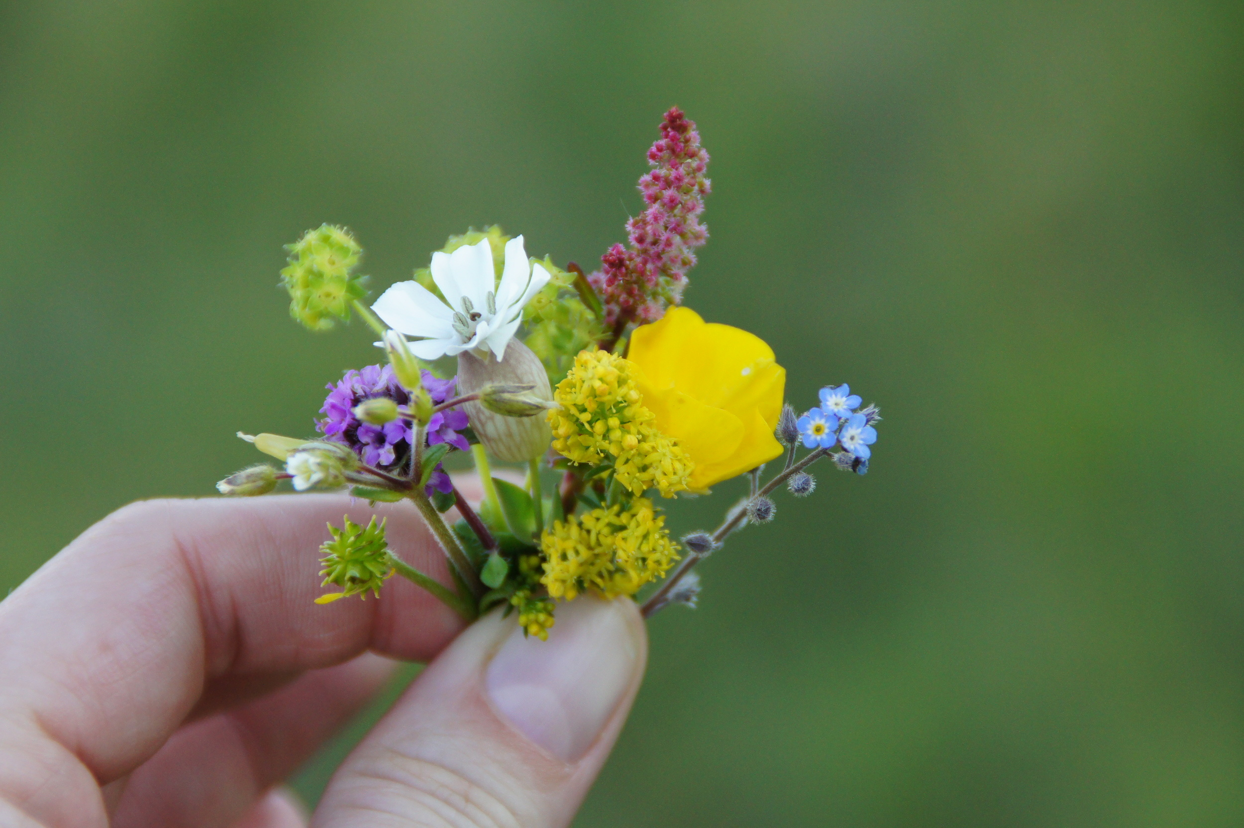 While Chris ran up the steep hill, I took my time picking the tiniest bouquet of wildflowers.