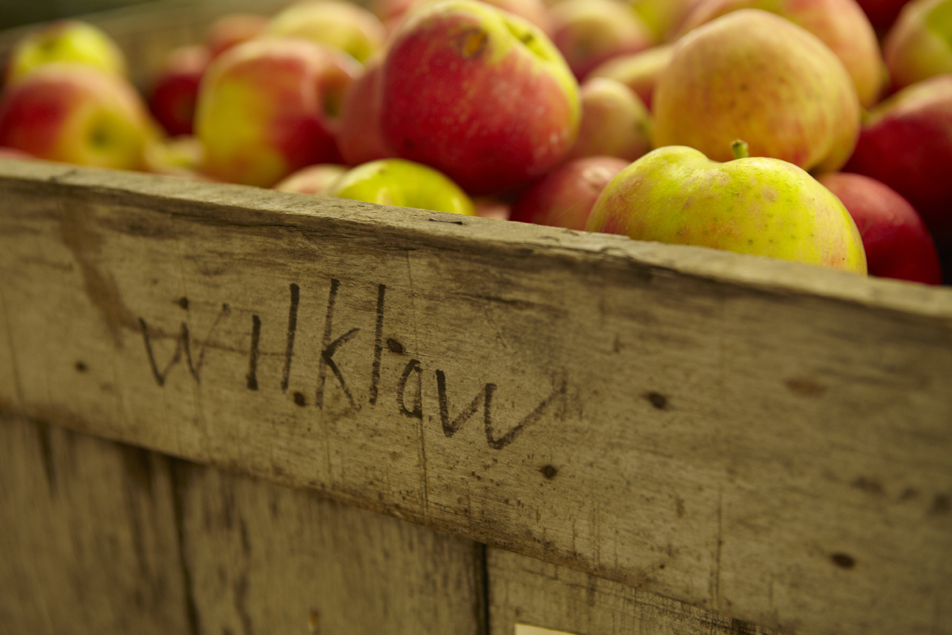 Wilklow Family Farm (where we get our apples)