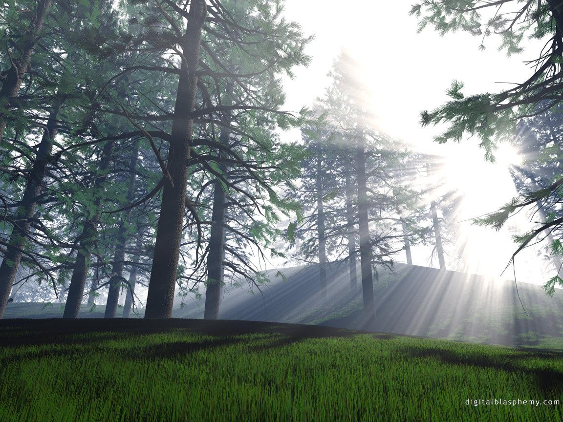 wallpaper_morninglight.jpg