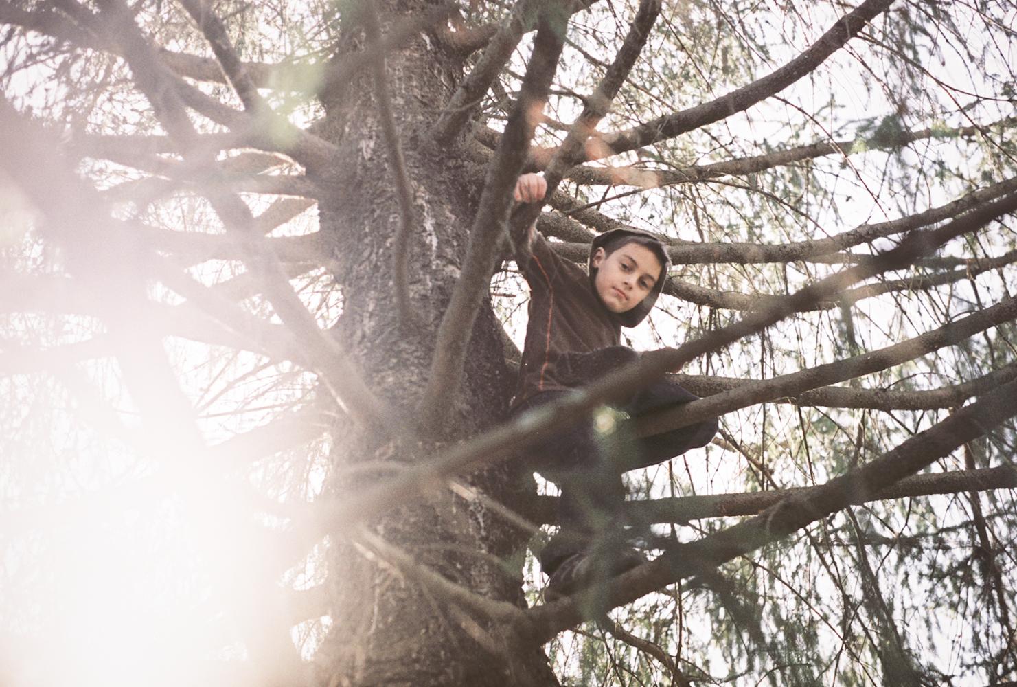 14_shaefer_in_a_tree.jpg