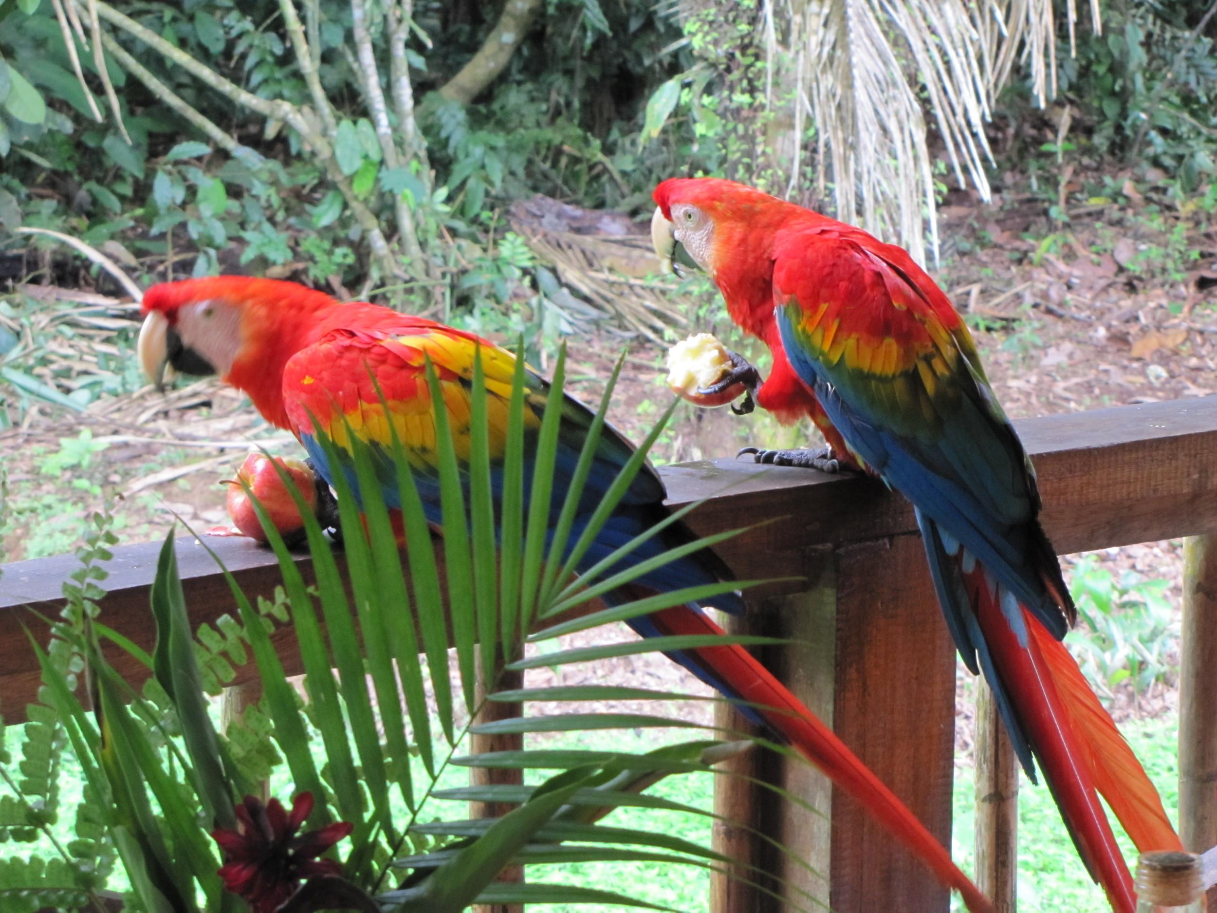 Macaws at TRC