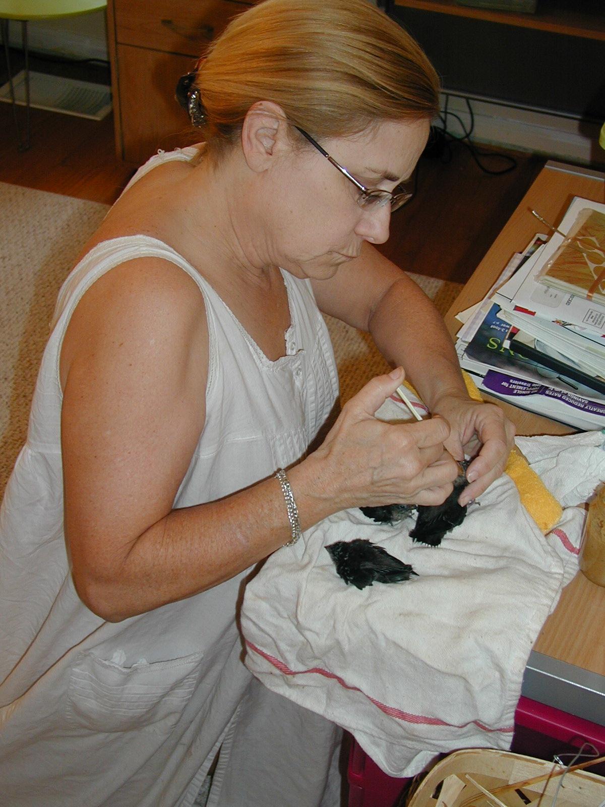 Helen feeding them by hand