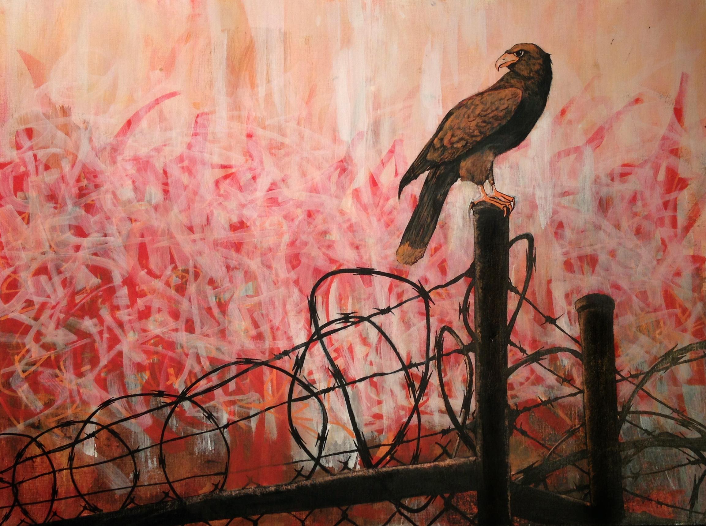 Falcon On The Fence.jpg