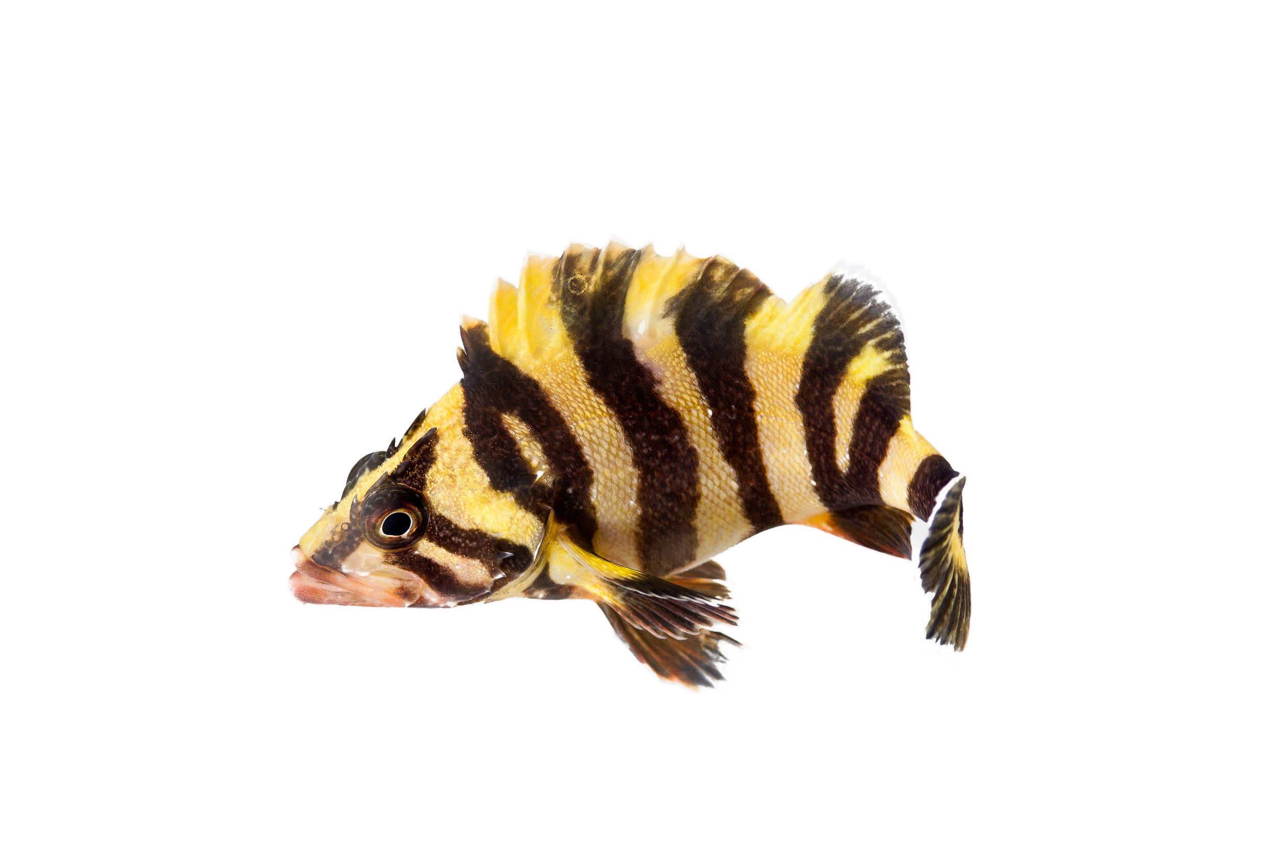 tree-fish.jpg