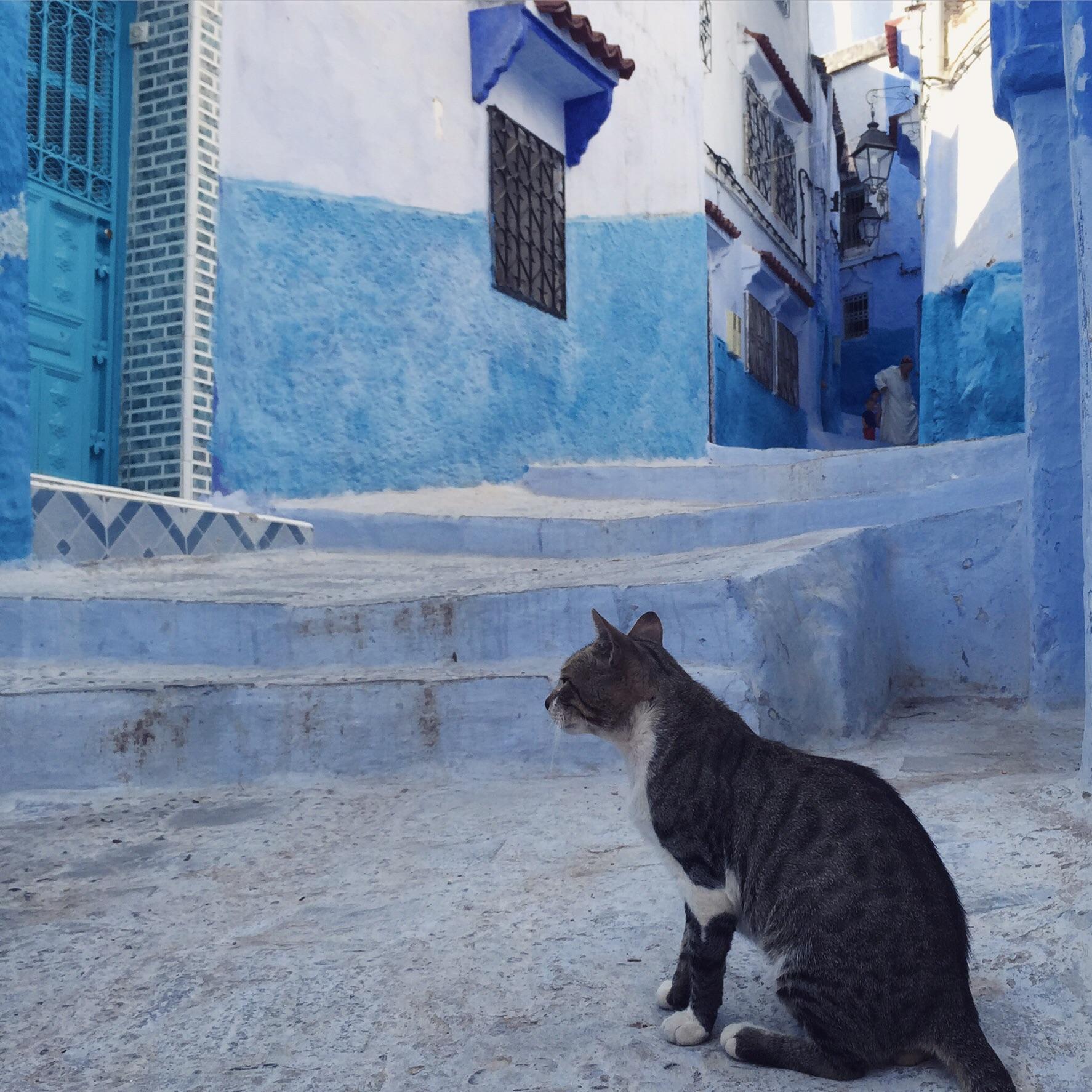 A cat in Chefchaouen's blue medina.