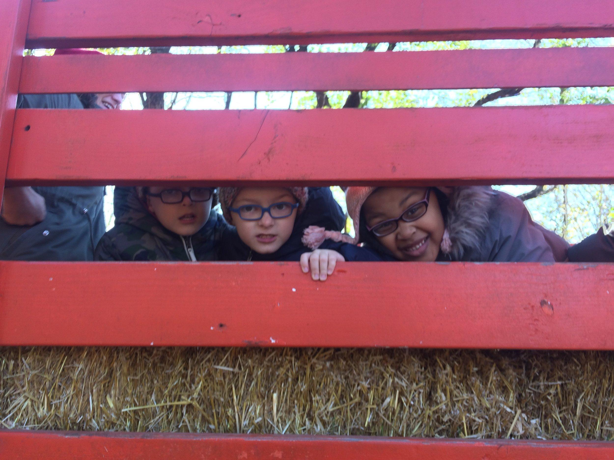 Queens Farm Day, November 2018