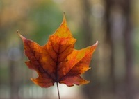 leaf#3.jpg