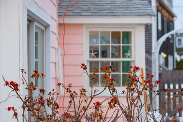 Just when I was beginning to accept & appreciate the subtle achromatic shades of winter, this little pink cottage warmed me into rememebering & feeling all the color and activity quietly awaiting us around the corner.
