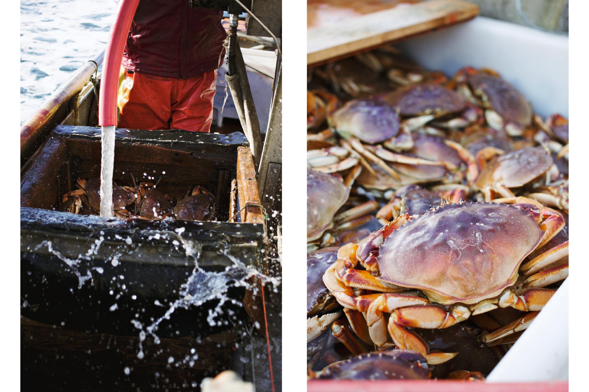 Crabbing12.jpg