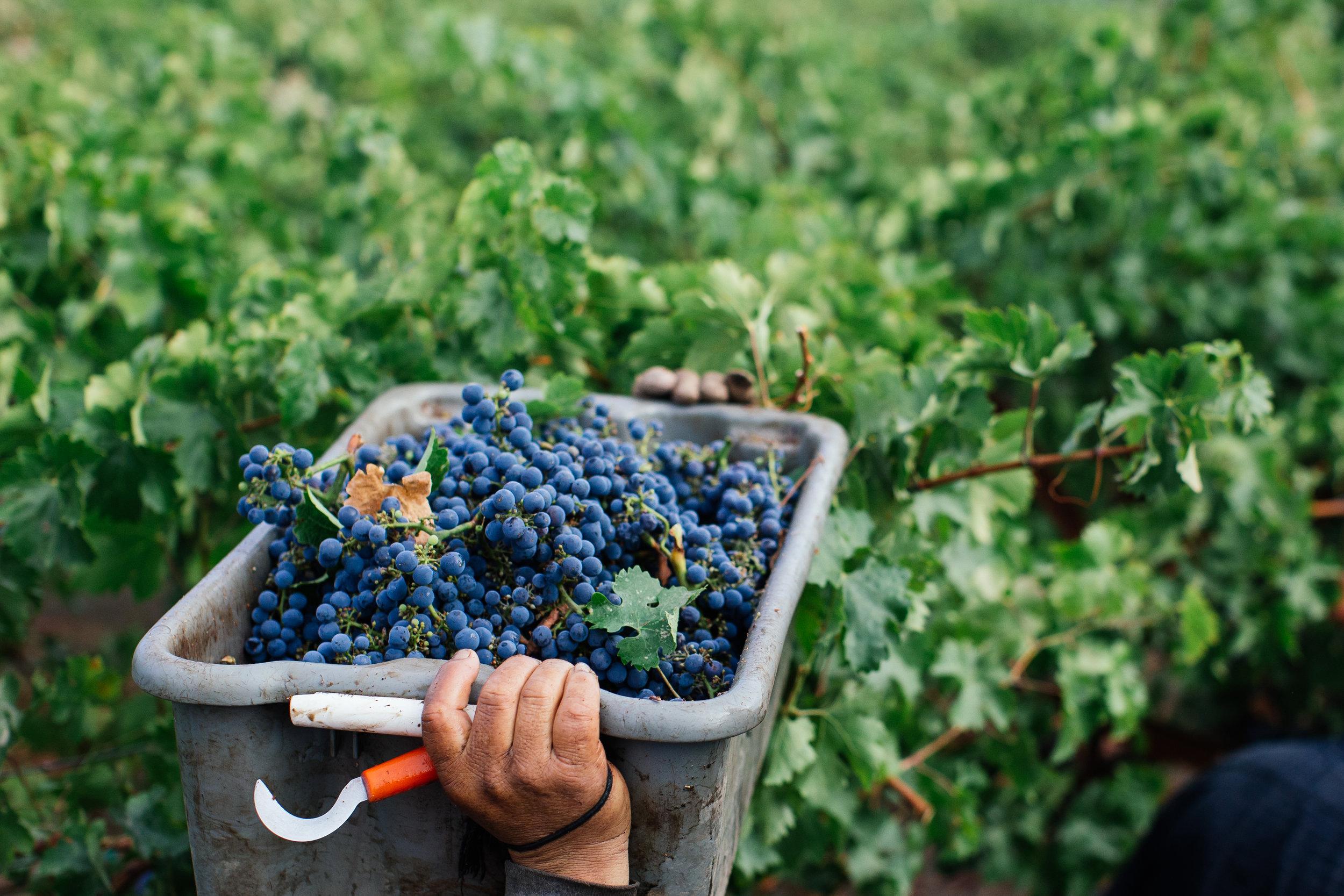 Harvest-1.jpg