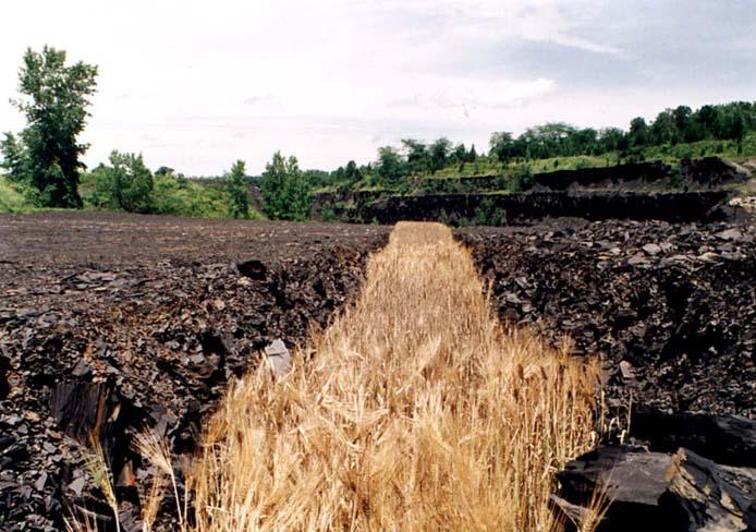 barley1.jpg