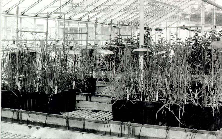 barley3.jpg