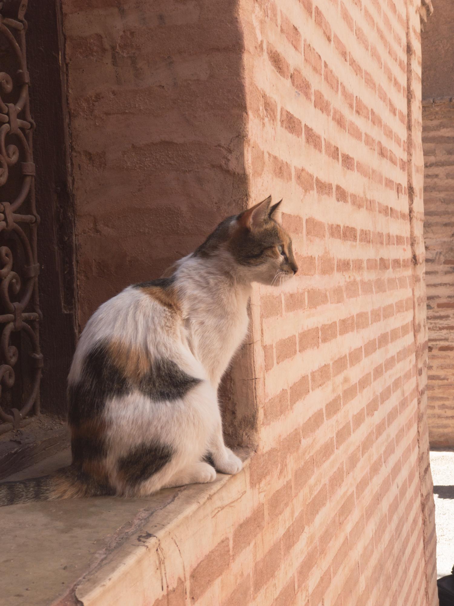 Marrakech_iPhone8+_Photos - Blog_Photos-15.jpg