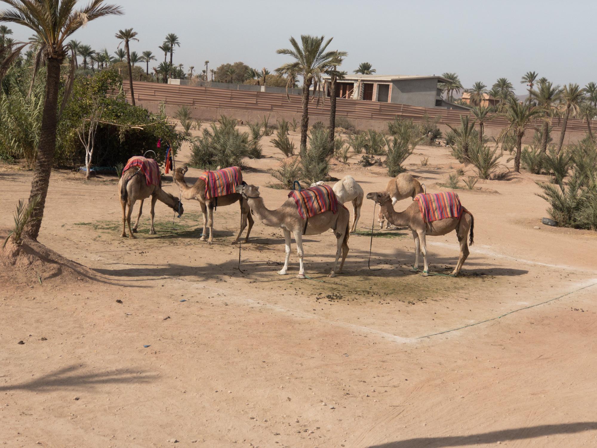 Marrakech_iPhone8+_Photos - Blog_Photos-41.jpg