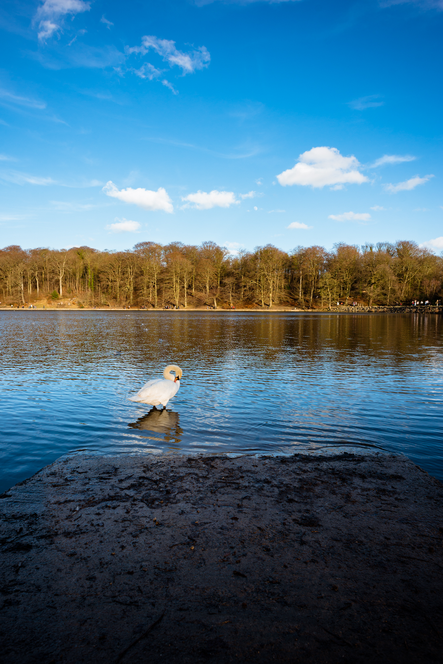 Roundhay Photo_Insta.jpg