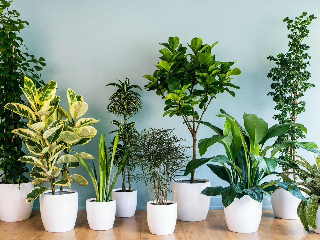 house-plants-decor-grouping-0213.jpg