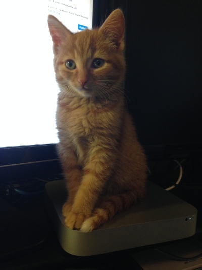 He is an Apple/Mac cat as he found a nice spot on my dad's Mac Mini to perch on when were home a month ago.
