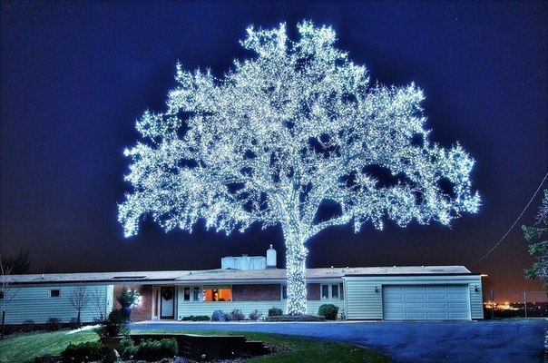 40-000_LED_lights_and_a_beautiful_tree_is_ready.jpg