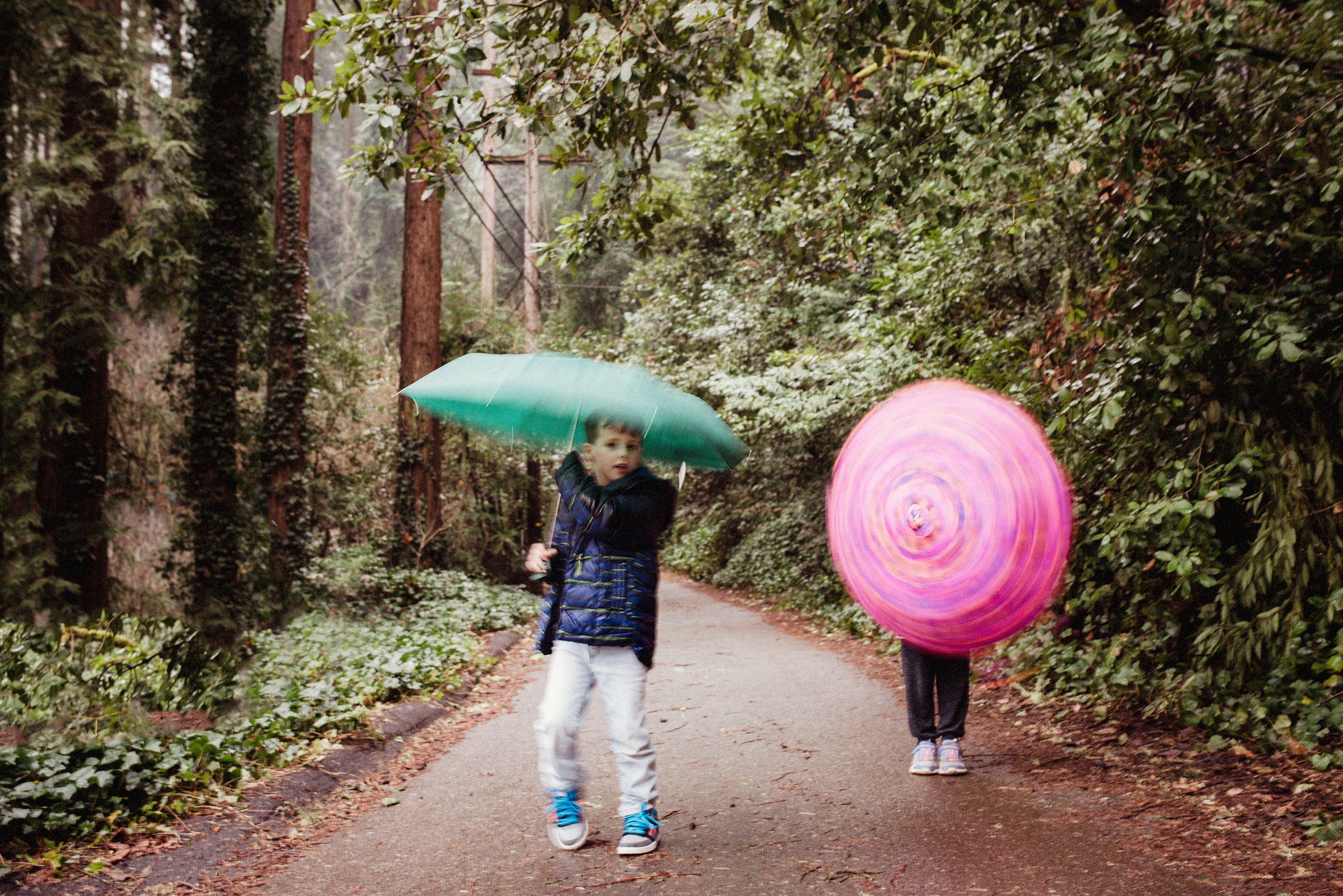 umbrellas_forest_walk (web).jpg