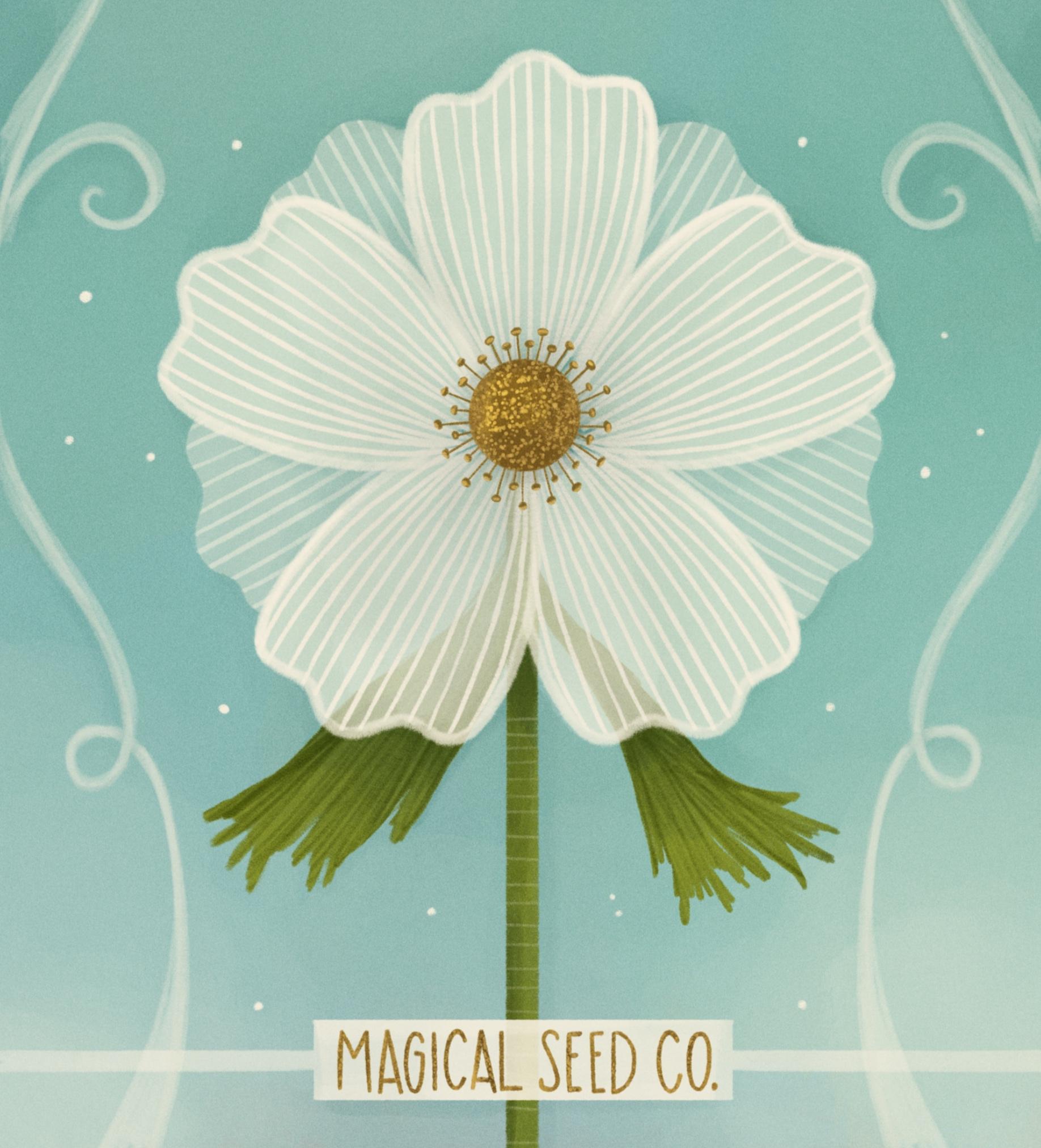 anemone flower_kellyannedalton