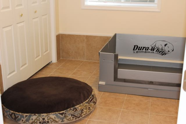 We here at High Country Labradoodles use the Dura-Whelp system to whelp our litters.