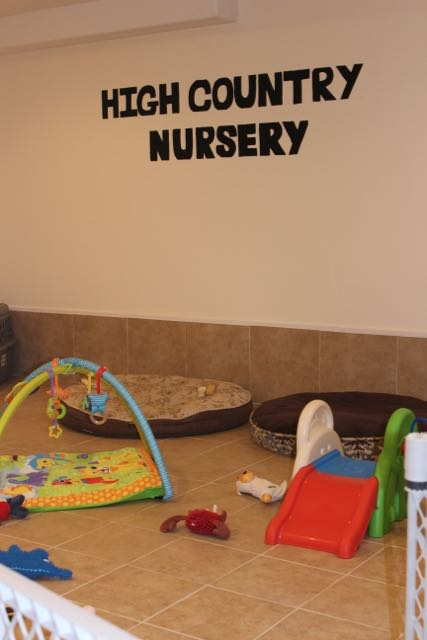 High Country Nursery the puppy play area!