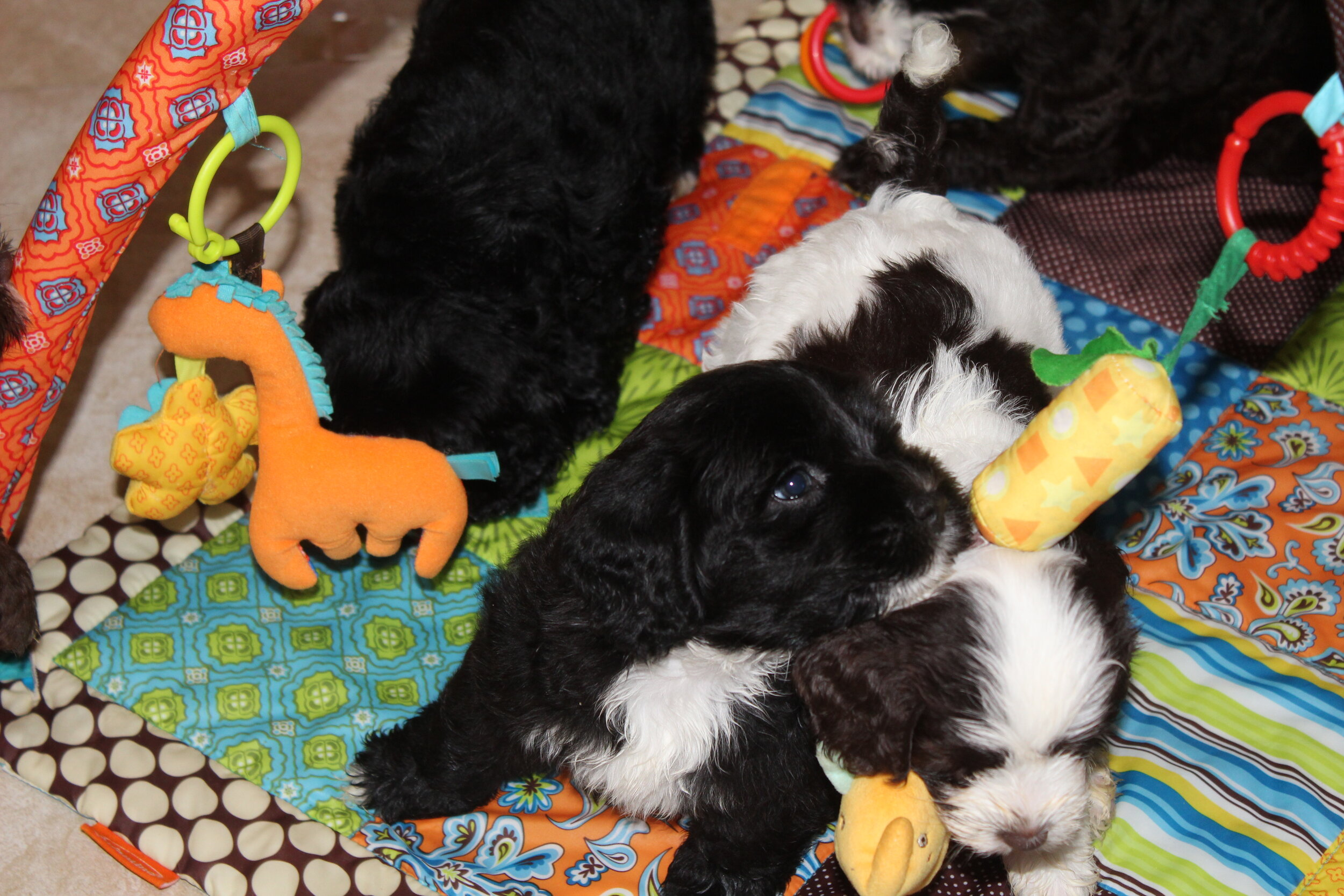 Carly Pups at Play 13 20JUL19 158.JPG