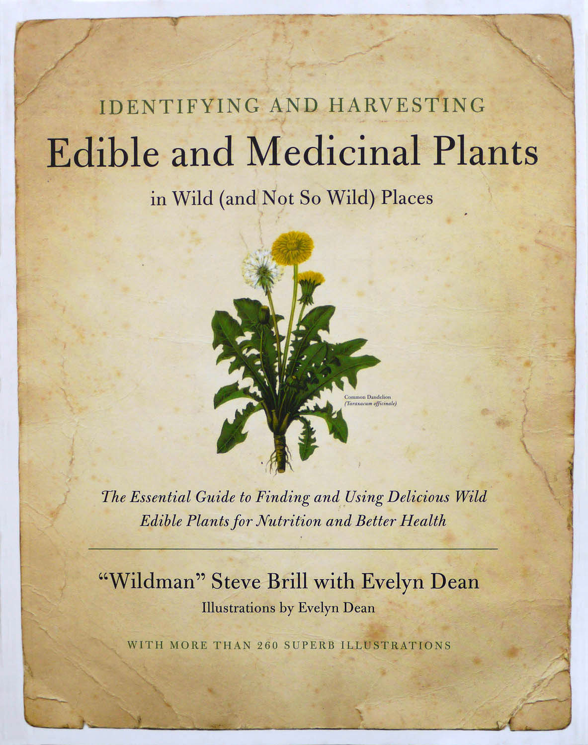 to-be-magnetic-edible-and-medicinal-plants
