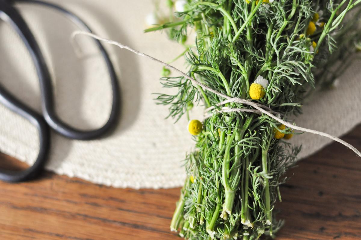 Freeandnative_Drying_Herbs_2.jpg
