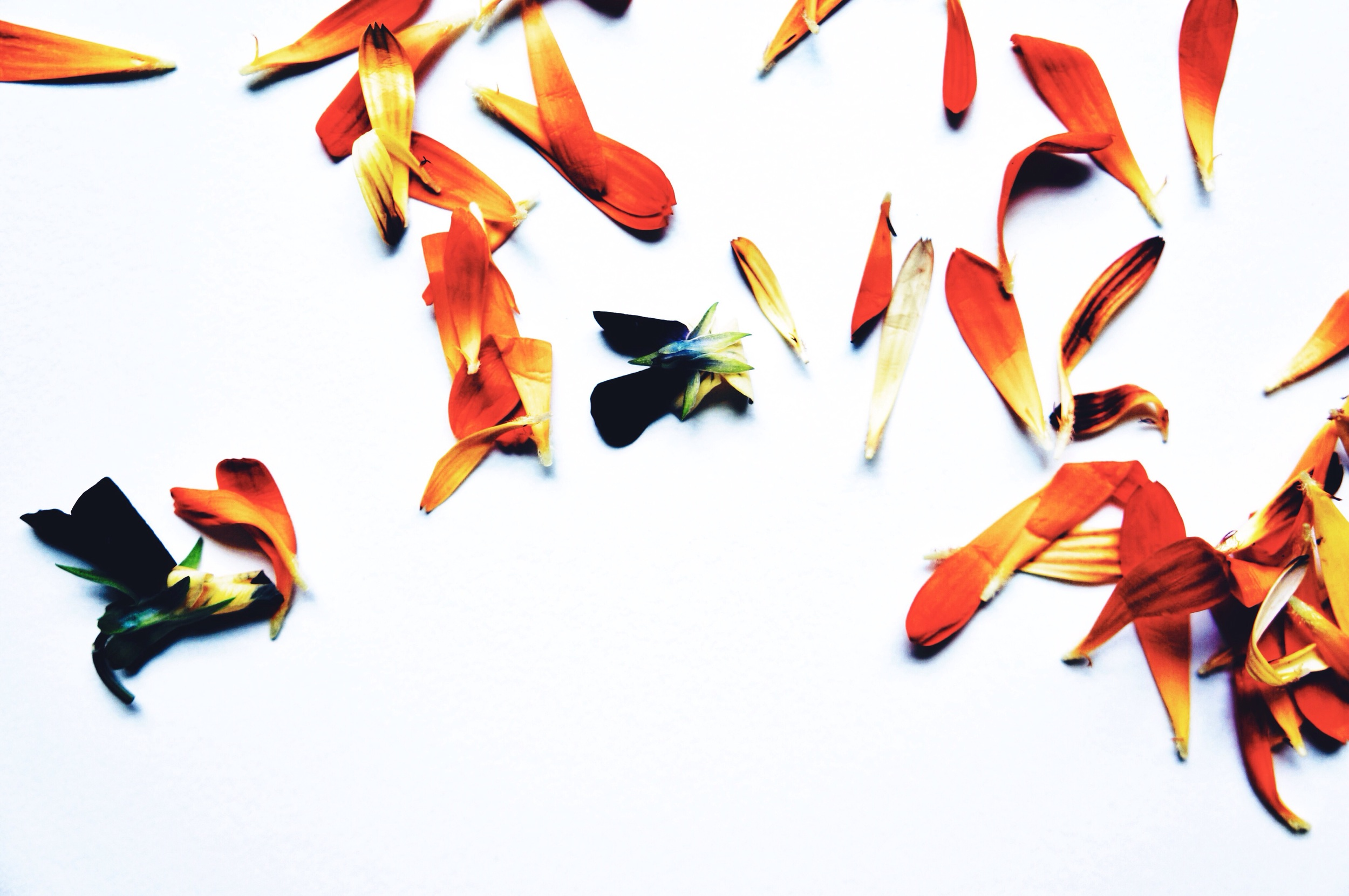 Edible Flowers 1.jpg