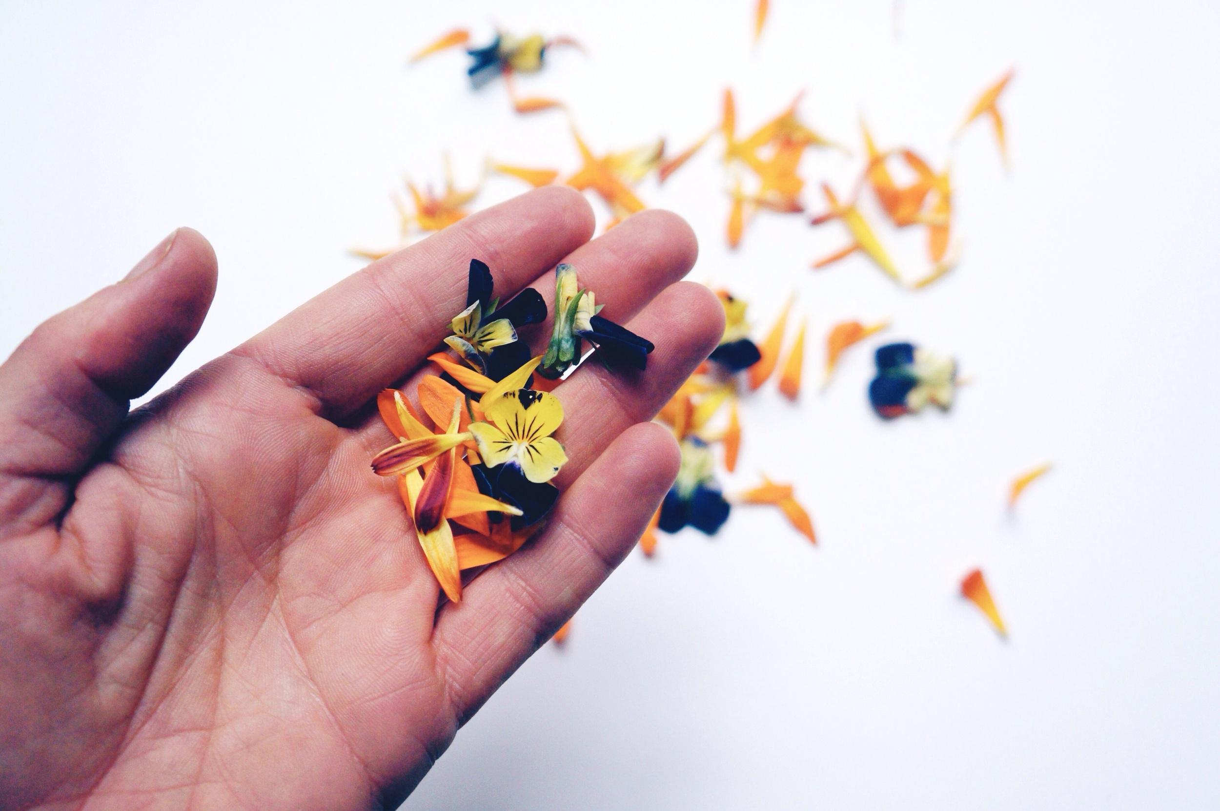 Edible Flowers 8.jpg