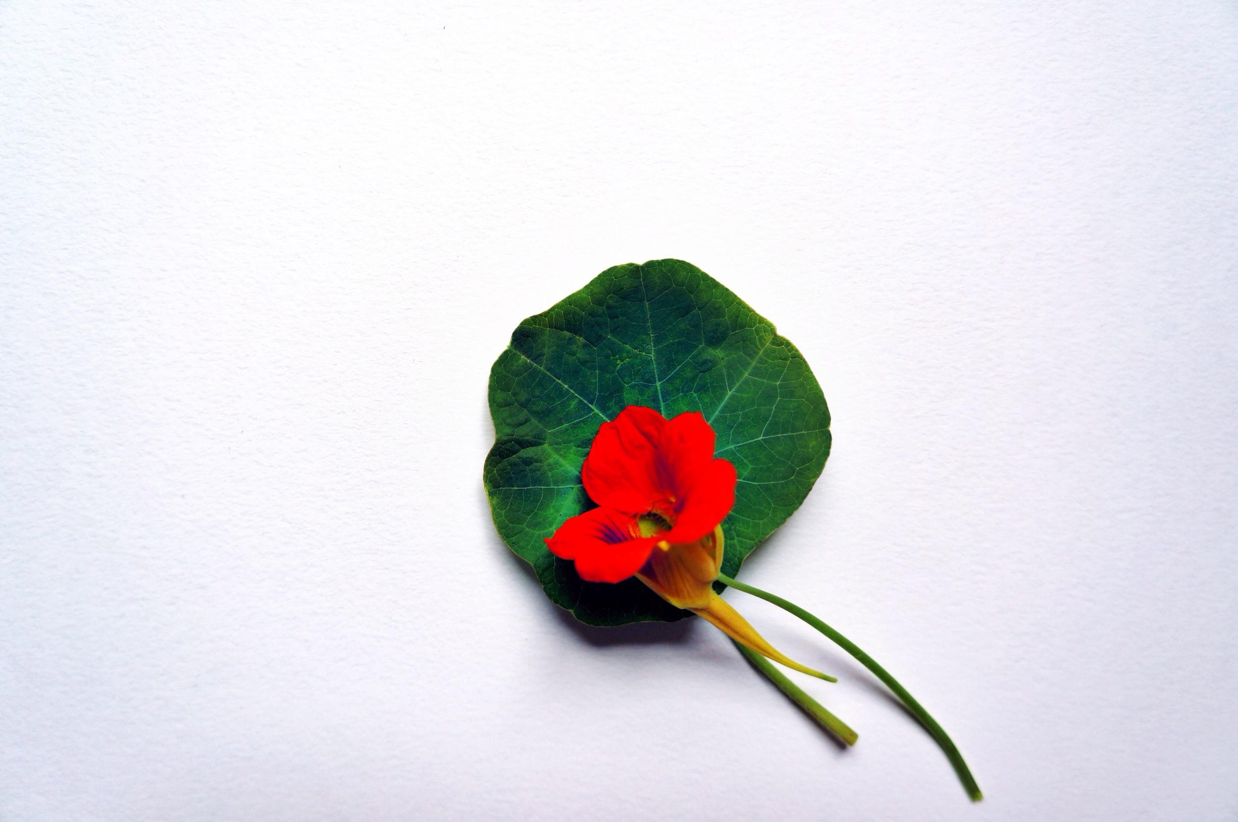 Edible Flowers 10.jpg