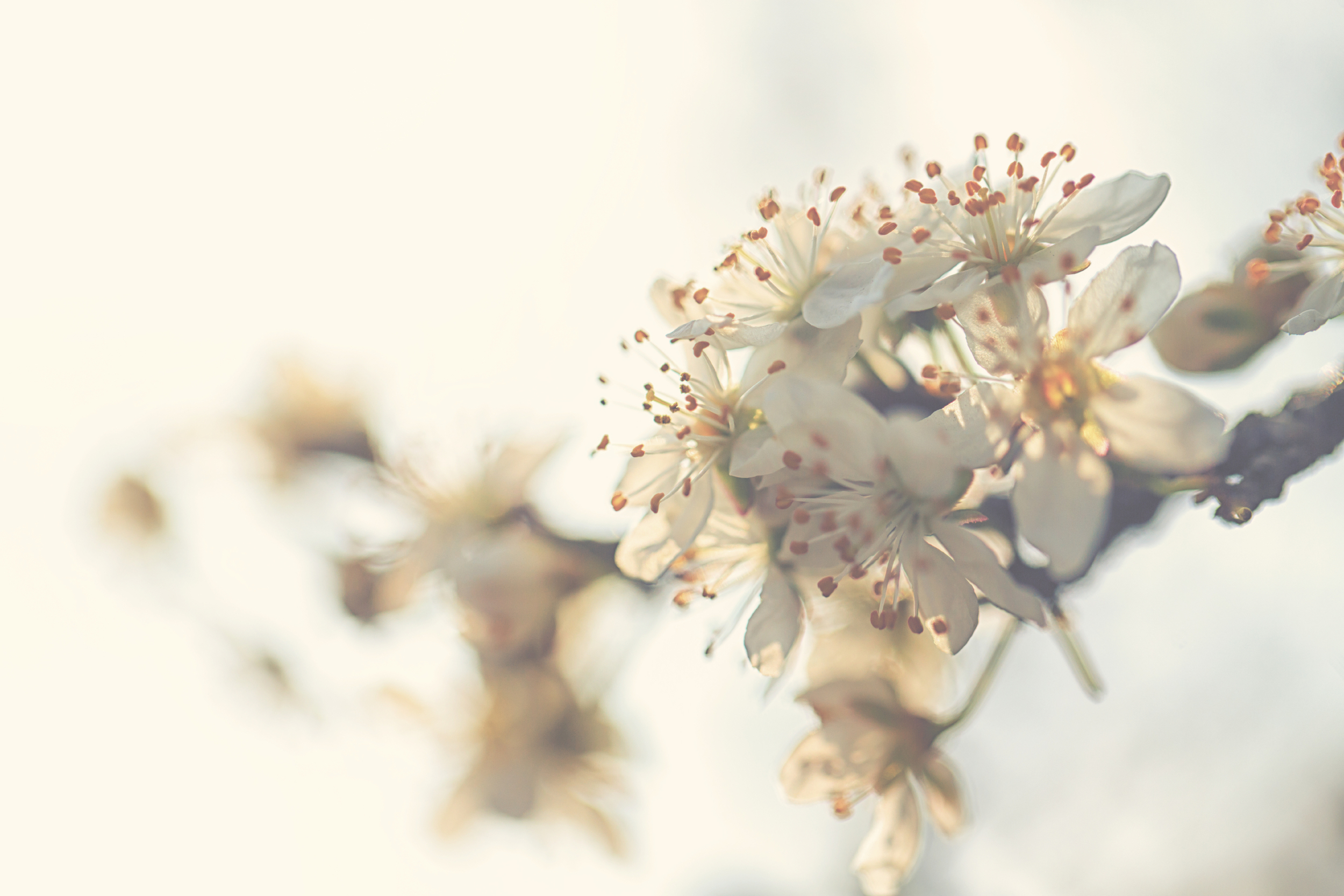 to-be-magnetic--flowers