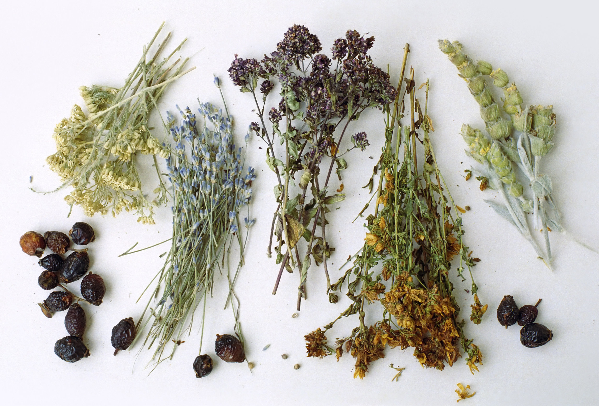 free-and-native-flowers-herbs-Kristin Dahl