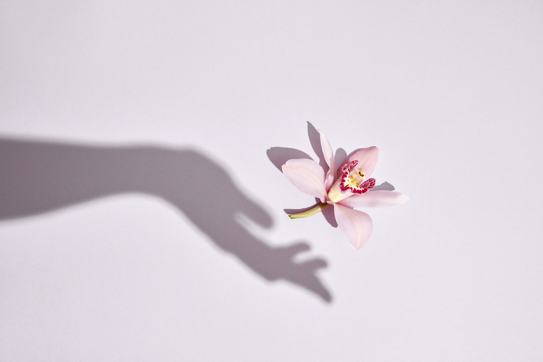 To-be-magnetic-prosperity-spring-flower-equinox-full-moon