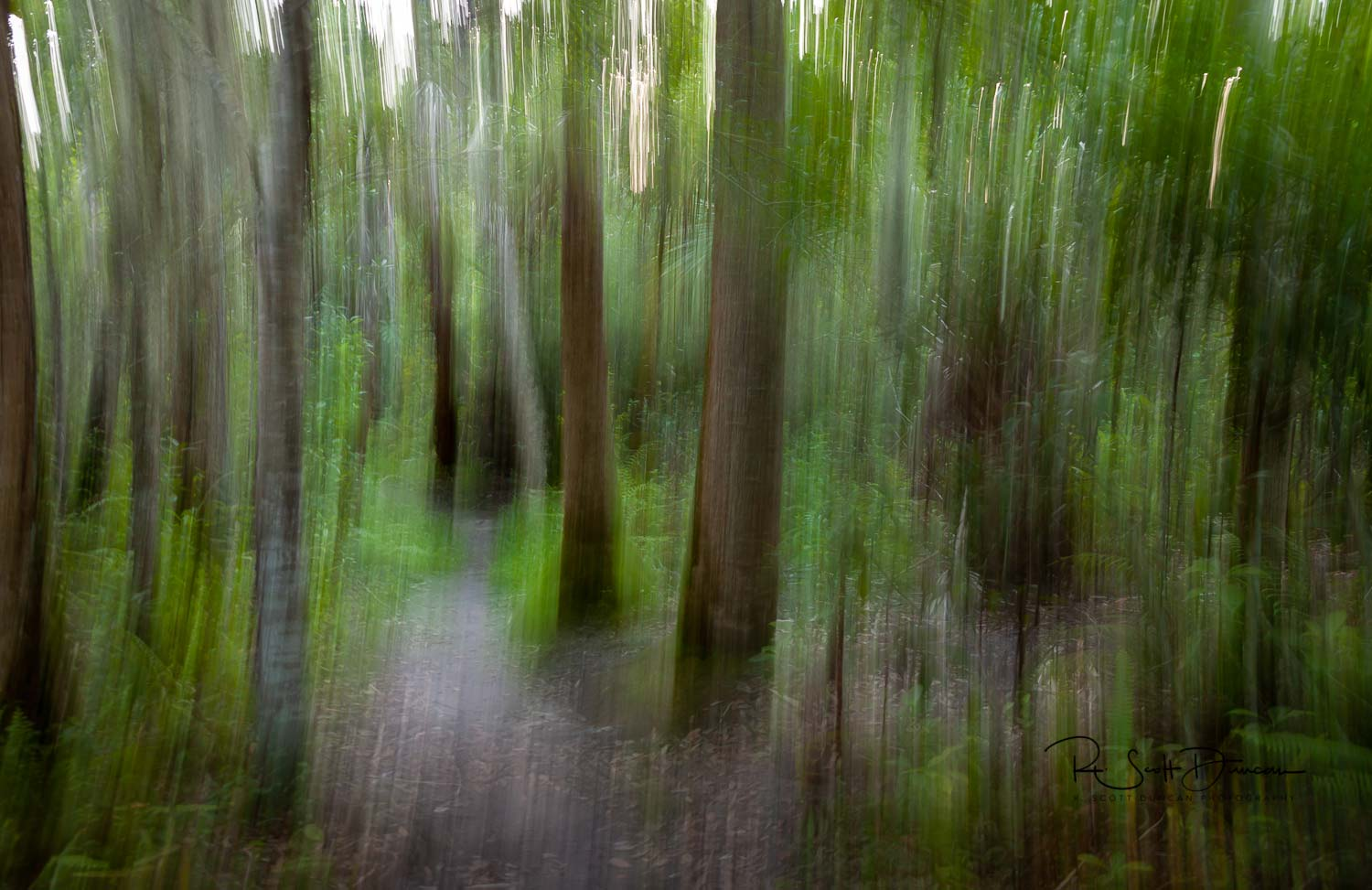 nature-trail-art-abstract-photo.jpg